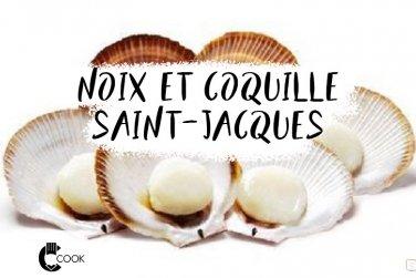 Coquilles, noix de Saint-Jacques: produits phare des fêtes