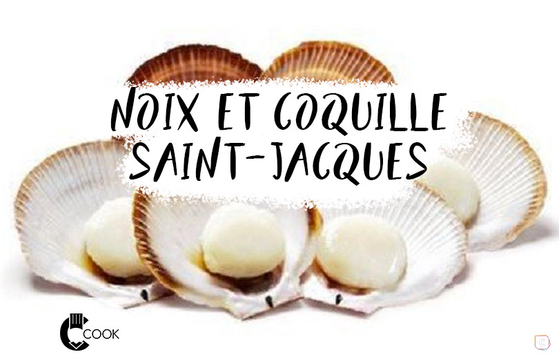 noix-coquille-stJacques-vig.jpg